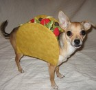 Halloween Pet Costumes - Dog As Taco
