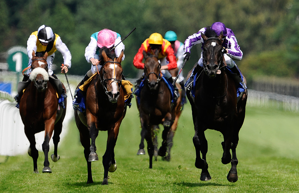 Handicapping Software for Horse Racing