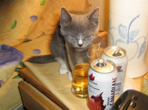 Cats Who LOVE Beer - One Too Many