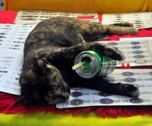 Cats Who LOVE Beer - Epic Party