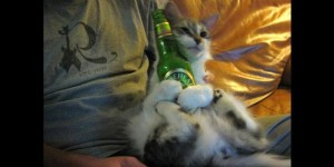 Cats Who LOVE Beer - All Mine