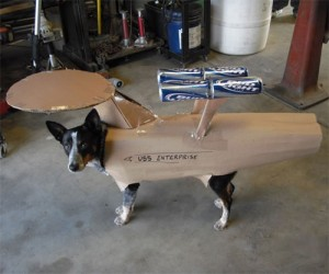 Halloween Pet Costumes - Dog as Spaceship