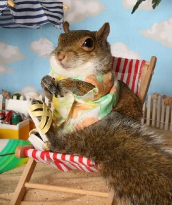 Anthropomophism Animals Dressed as Humans - Squirrel on Beach
