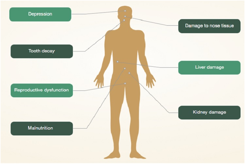 Cocaine effects on body