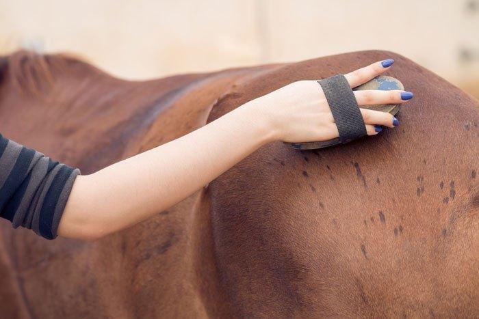 horse routine